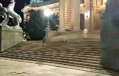 Sraman incident ispred Skupštine: Huligani vređali policajce i hteli da se POMOKRE na njih (VIDEO)