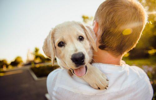 Hranite ga, kupate, šetate, a on se ipak više mazi sa drugima? Koga zapravo vaš pas najviše voli?