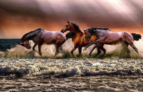 Sanjali ste konja, slona ili mačku? Proverite šta to znači i šta vam snovi PORUČUJU