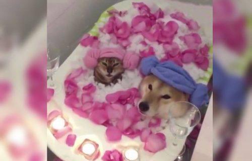 Kupka iz snova: Pas i mačka koji baš umeju da UŽIVAJU će vas slatko nasmejati (VIDEO)
