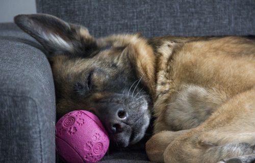 Nakon tri meseca borbe, uginuo pas oboleo od korone