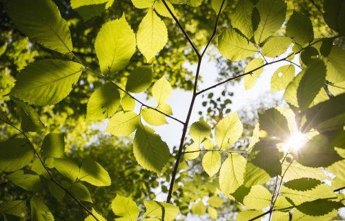 Iskoristite Miholjsko leto: Danas još toplije nego juče, ali uskoro se vraća jesen