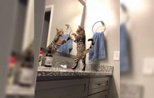 Ljuta suparnica iz OGLEDALA: Urnebesan snimak mačke koja se BORI sa svojim odrazom (VIDEO)