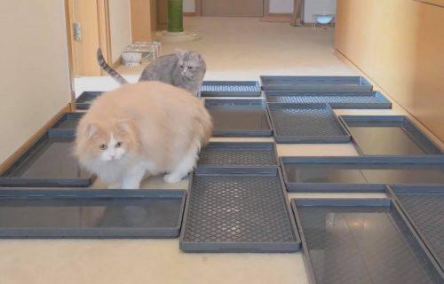 Probaj da se ne pokvasiš! Pogledajte kako su mačke našle IZLAZ iz vodenog LAVIRINTA (VIDEO)