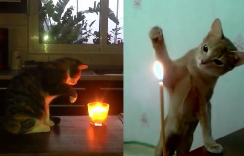 Mačke u borbi sa SVEĆAMA: Neke su ugasile plamen, a jedna se mnogo UPLAŠILA (VIDEO)