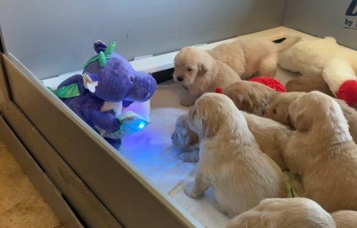 Kad ZMAJ čita priču, svi štenci slušaju sa pažnjom: Preslatki su i osvojiće vas na prvo GLEDANJE (VIDEO)