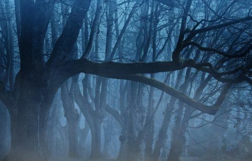 Ujutro se čuju krici i jaukanja, a uveče plač: Ovo je najjezivija šuma na svetu (FOTO)