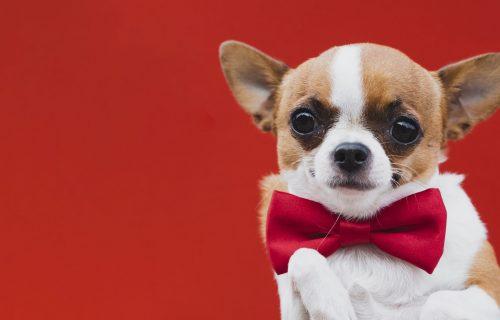 Gosn' Trampe, vi ste? Genijalan snimak psa, nasmejao je ceo internet (VIDEO)