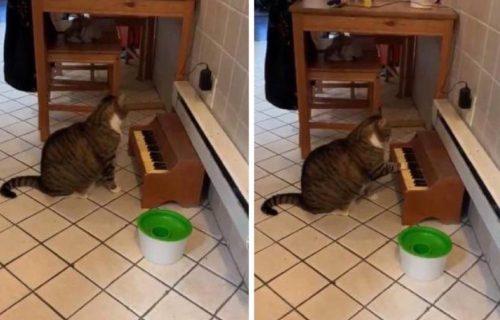 Ko to tamo SVIRA? Mačka nije odolela malenom klaviru, pa redovno drži KONCERTE (VIDEO)