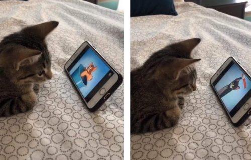 Vlasnik snimio mačku kako gleda CRTANI Tom i Džeri: Njena reakcija postala hit na internetu (VIDEO)