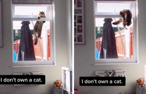 Pusti me unutra! Mačka se LAVOVSKI borila da uđe u stan u kojem čak ni ne ŽIVI (VIDEO)