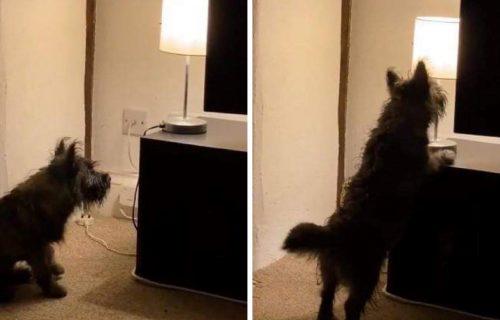 Ugasi, upali i tako u KRUG: Maleni je otkrio lampu koja radi na dodir, pa napravio pravu ZABAVU (VIDEO)