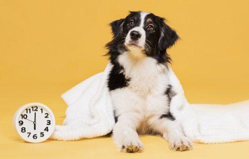 Nećeš ti NIGDE! Da bi sprečio vlasnika da ode na posao, preslatki pas redovno gasi ALARM (VIDEO)