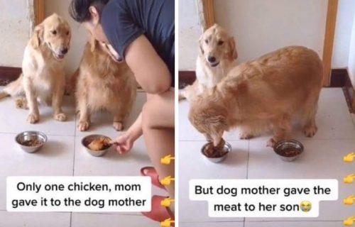 MAJKA je majka: Odrekla se jedinog parčeta mesa zbog svog SINA! Od pasa bismo mogli da učimo (VIDEO)