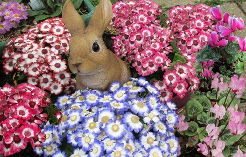 Cinerarija: Prelepi šareni cvet će osvežiti svaku kuću (FOTO+VIDEO)