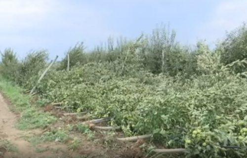 Vetar iščupao 400 stabala jabuke pune roda, ljudi očajni, za 20 minuta nestao dugogodišnji rad
