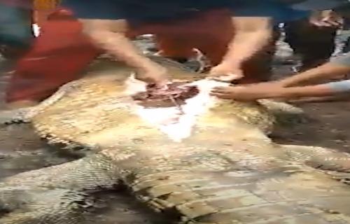 Užas: Iz krokodilovog stomaka izvadili ostatke dečakovog tela (UZNEMIRUJUĆI VIDEO)