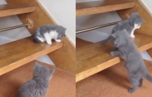 Mačići u pohodu na STEPENICE: Da li je trapavi Čarli uspeo da se popne do svoje sestrice Lole? (VIDEO)