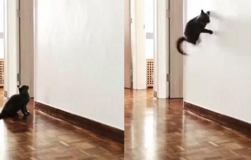 Spajdermen u telu MAČKE: Nećete verovati kakve AKROBACIJE izvodi na zidu (VIDEO)