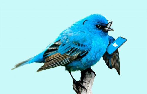 Twitter razmatra uvođenje pretplate, evo šta biste dobili za svoj novac (FOTO)