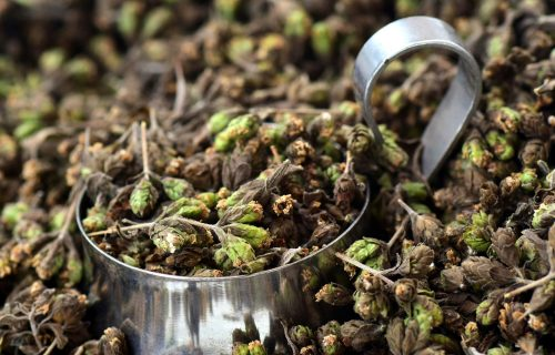 Čaj od origana podstiče apetit, ublažava bolove i jača imunitet (RECEPTI)
