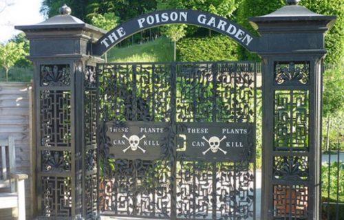 Otrovna bašta od koje svi drhte: Na ulazu stoji ZLOKOBNI natpis, biljke u njoj ubijaju i mirisom (VIDEO)