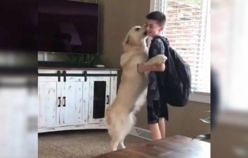 Topla dobrodošlica! Dečak se vratio iz škole, a PAS je pokazao koliko mu je NEDOSTAJAO (VIDEO)