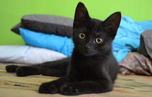 I one imaju OSEĆANJA: Nadzorna kamera zabeležila šta mačka radi dok ČEKA vlasnicu (VIDEO)