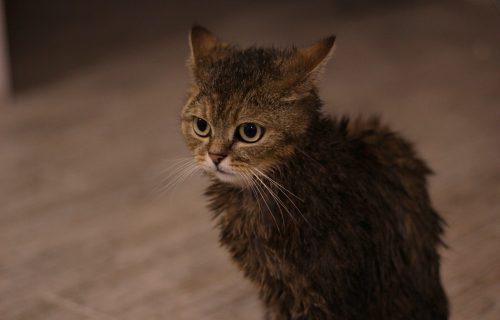 Oprala je MAČKU kao od šale! Trenutak nepažnje je macu mogao da košta ŽIVOTA (FOTO)