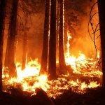 NAJVEĆI POŽAR u Finskoj u poslednjih 50 godina: Nestalo 300 hektara šume, nedeljama će trajati gašenje