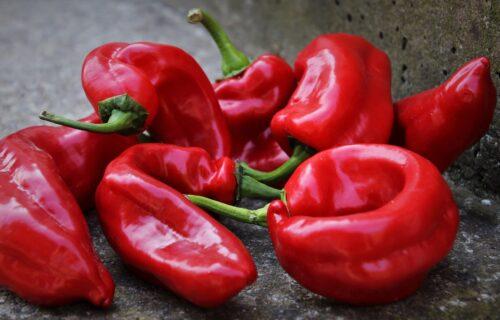 HIT! Da li znate koji naziv za papriku koriste u Pirotu?