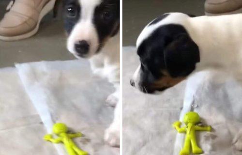 Kuco, kako si to uspeo? Presladak pas povratio veliki PREDMET i izbegao OPERACIJU za dlaku (VIDEO)