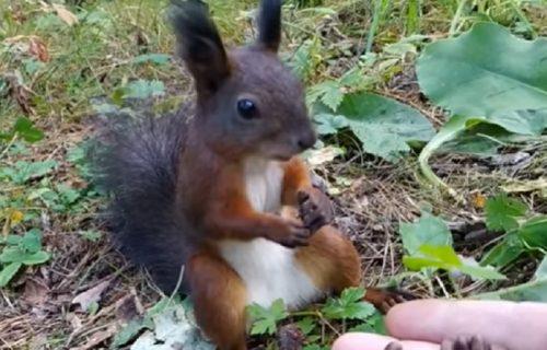 Urnebesno: Veverica došla kad je videla šta ima u ruci, a onda se samo UKOČILA (VIDEO)