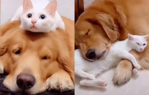 Oni su NERAZDVOJNI! Snimak prijateljstva psa i mačke koji će svakoga raznežiti (VIDEO)