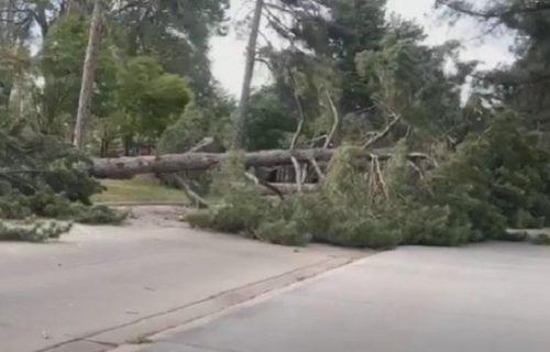 Kad se priroda naljuti na čoveka: Oluja čupala stabla i bacala ih na kola, ljudi i bez struje (VIDEO)