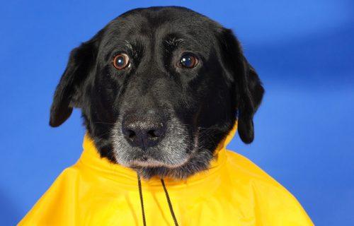 Ovaj pas ne želi da se kvasi i JAVNO PORUČUJE: Ne volim kišu, neću napolje i uopšte nije smešno! (VIDEO)