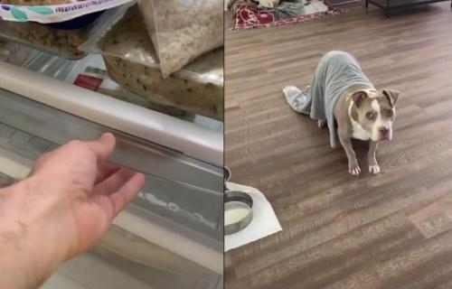 Kakva brzina! Čim je nanjušio da će vlasnik da uzme HRANU, pas se odmah STVORIO ispred frižidera (VIDEO)