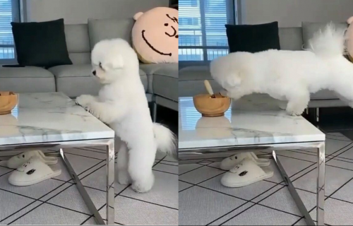 Pas je hteo da proba hranu iz činije, ali je uspeo samo da odradi VEŽBU istezanja (VIDEO)
