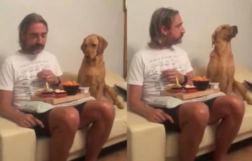 Pas čežnjivo gleda u hranu, ali čim ga vlasnik primeti, on se PRAVI da je nezainteresovan (VIDEO)