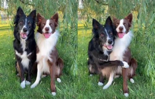 Trenuci nežnosti: Pas tačno ZNA kada treba da ZAGRLI svog brata (VIDEO)