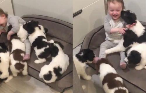 Najčistija LJUBAV: Ne zna se da li su u ovoj igri više uživali ŠTENCI ili beba (VIDEO)