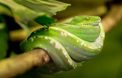 Proganja ga danju i noću: Dečaka 8 puta u jednom mesecu ujela ISTA zmija, ne sme ni napolje da izađe