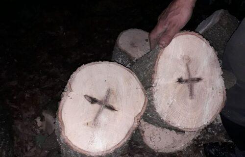 Božji znak u selu kod Topole: Predragu se UKAZAO KRST u zasečenom stablu hrasta (FOTO)