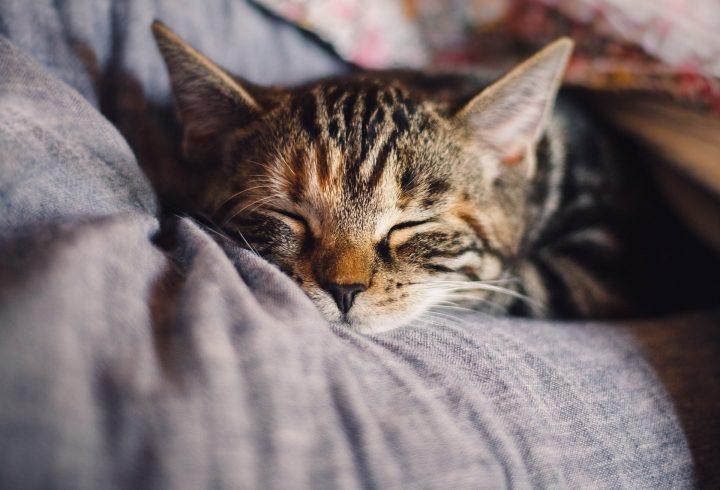 Ma, gde ti to spavaš, maco? Da li je ovo najluđe mesto koje je mogla da nađe? (VIDEO)