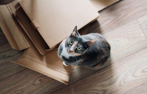 U ovom gradu nema mesta za jednu od nas: Urnebesan prvi susret mačke i BANANE (VIDEO)