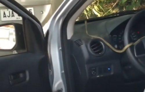 Ukočio se od straha: Ušao u automobil, pa kod volana ugledao zmiju (VIDEO)