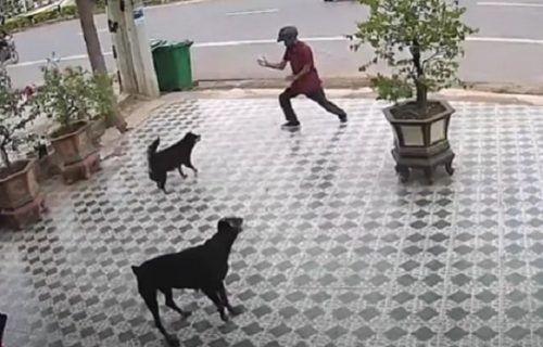 Napali ga psi na ulici: Prvo se sledio, da bi im potom pokazao tajne borilačkih veština (VIDEO)