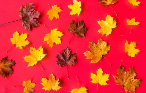Horoskop za 13. oktobar: BIK je danas nervozan, VAGI se preporučuje poslovna saradnja sa VODOLIJOM
