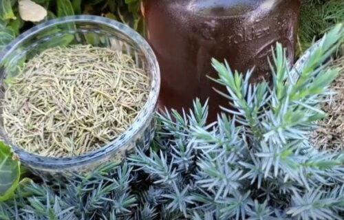 Čaj od rastavića