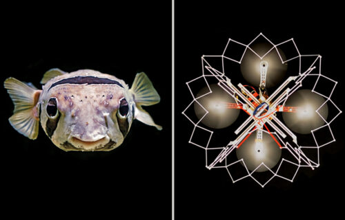 """Štiti sebe i druge: Dron se ponaša kao riba """"naduvača"""", pogledajte šta radi (VIDEO)"""